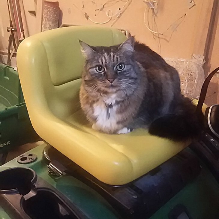 Opie on tractor seat