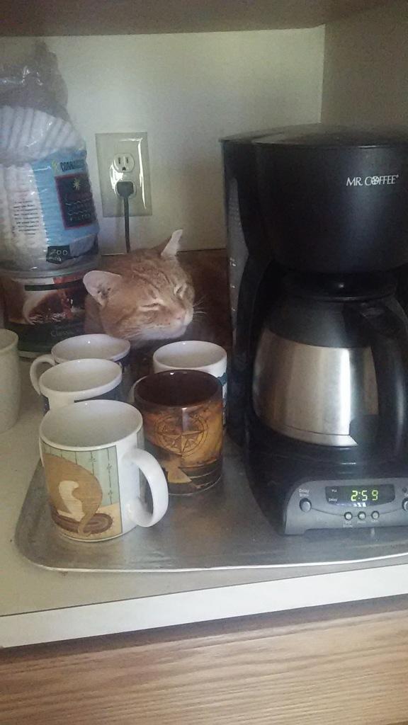 Scooby coffeebar