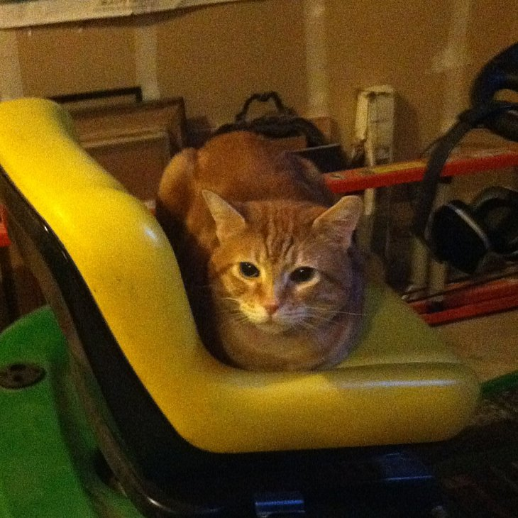 Scooby on tractor seat