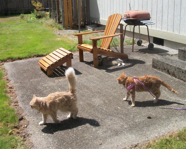 3 cats outside