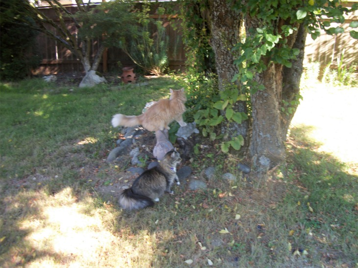 Opie Marigold cats
