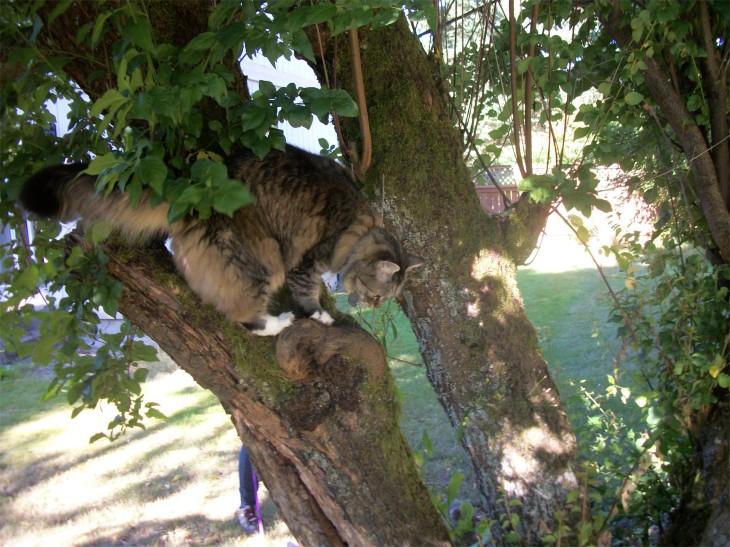 Opie plum tree