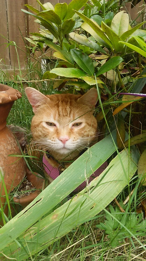 Scooby cat outdoors