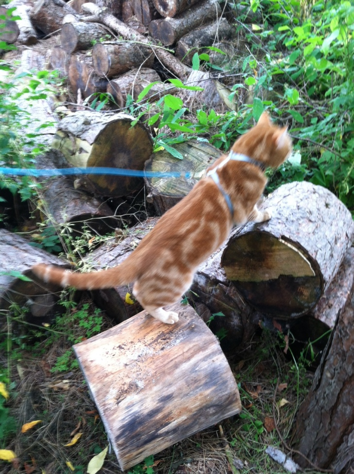 Scooby on woodpile