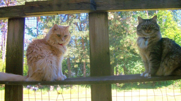 marigold opie in catio