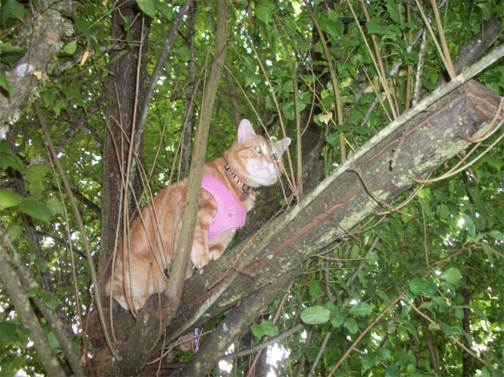Scooby in tree