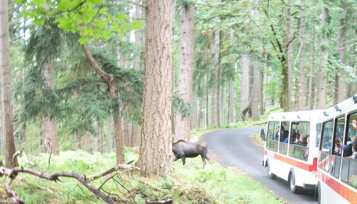 tram and moose