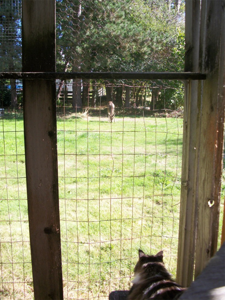 zeke deer catio