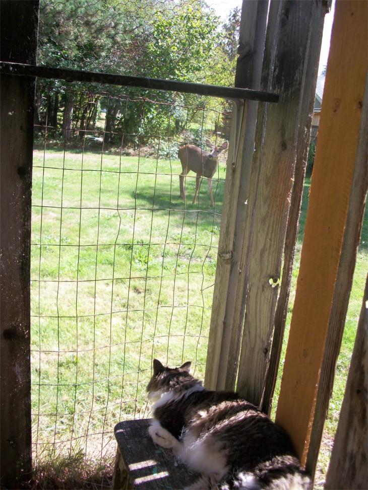 Zeke and deer