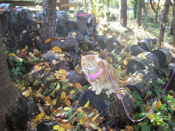 Scooby cat woodpile