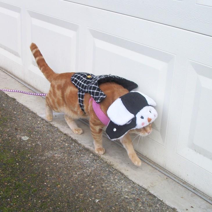 Scooby cat outside