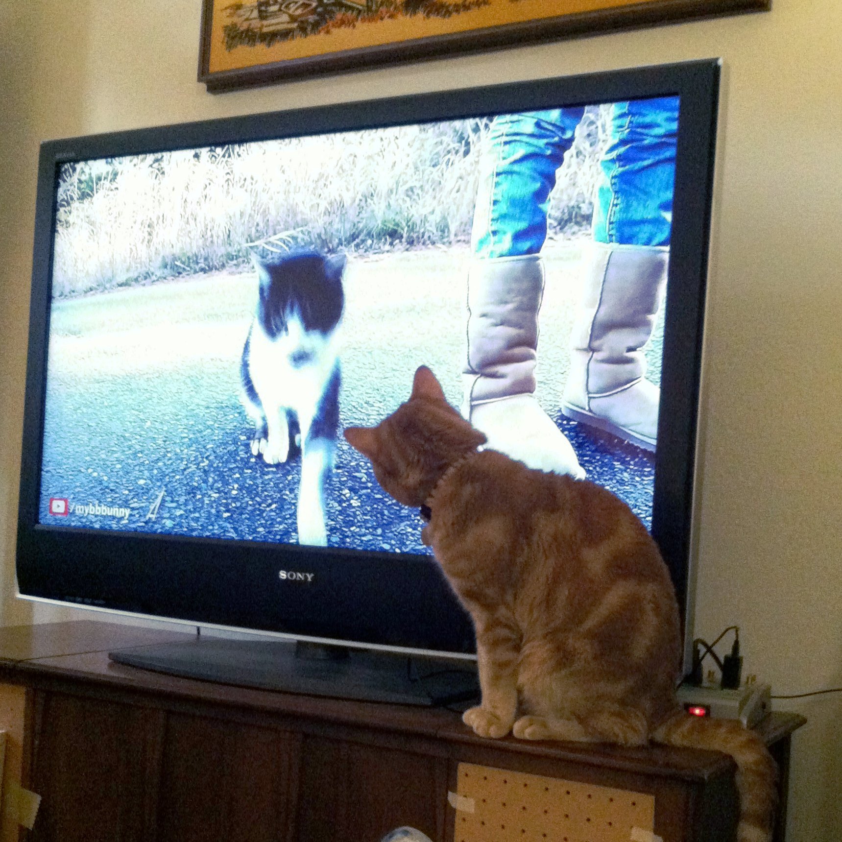 television watching cats feline caf233