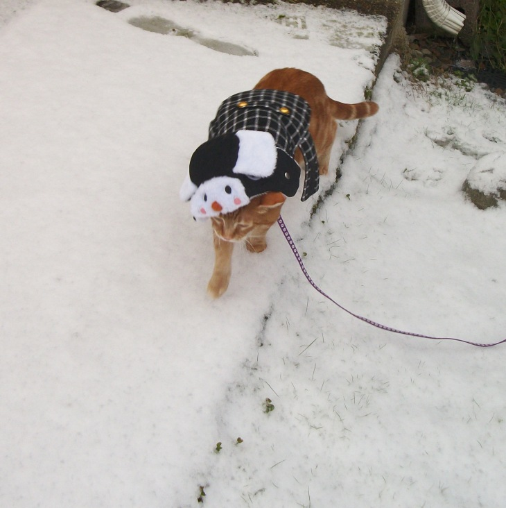 Scooby in snow