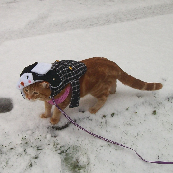 Scooby cat snow