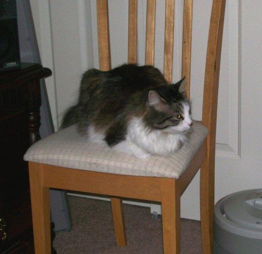 Zeke chair