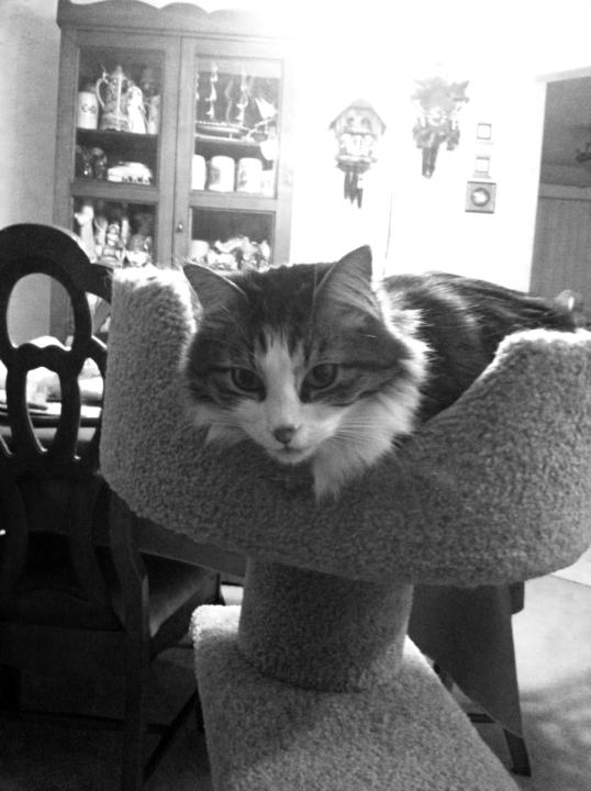 Zeke cat tree