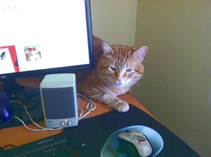 Scoob cat computer