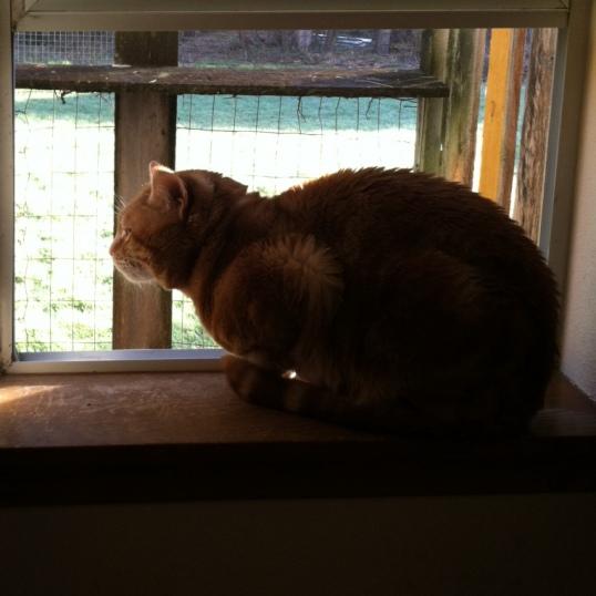 Scooby cat on windowsil