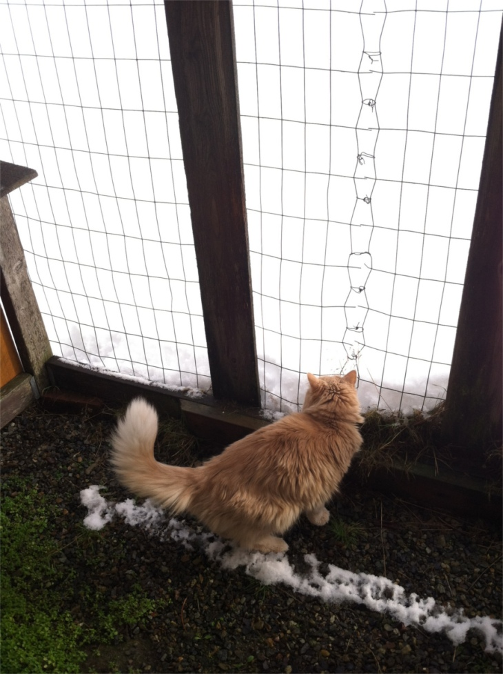 Marigold cat snow