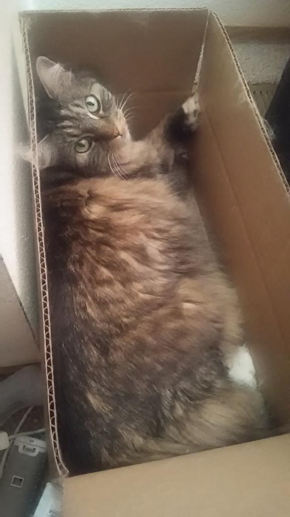 Opie in box