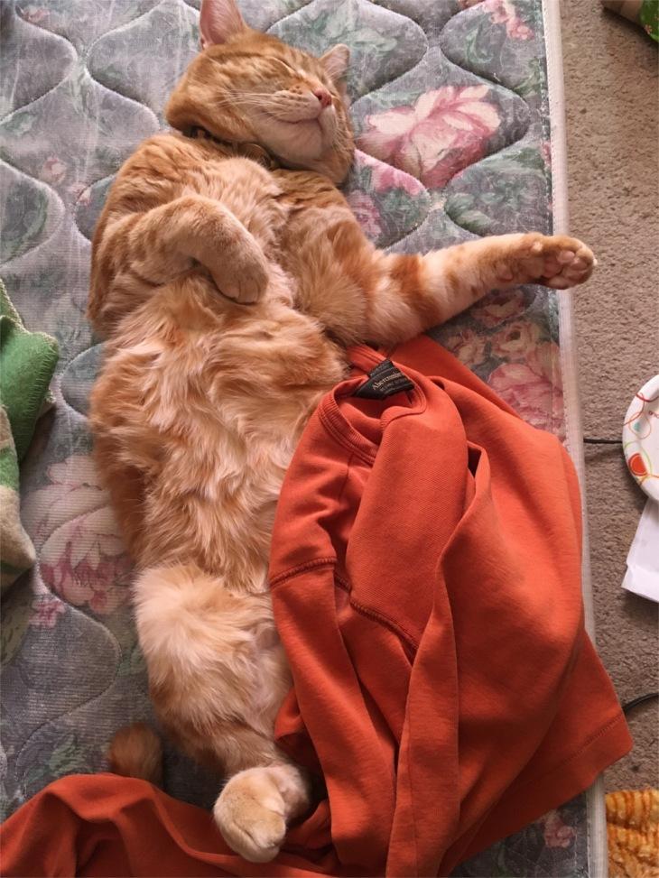 Scooby cat sleeping