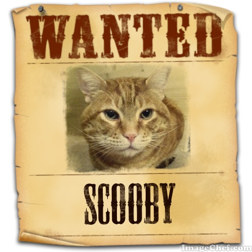 imagechef Scooby wanted poster