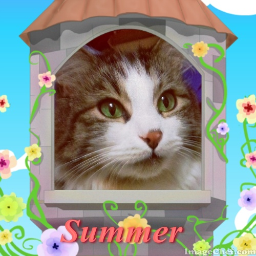 Zeke summer birdhouse