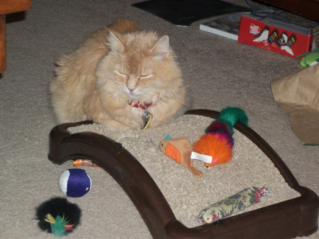 Marigold cat scratcher