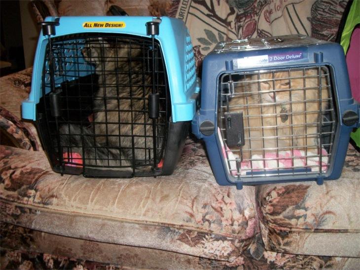Opie Marigold cats cat carriers