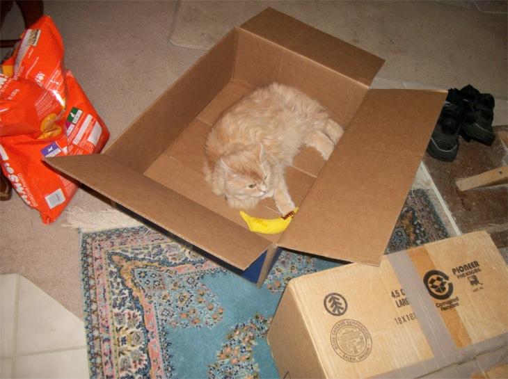 Marigold box catnip banana