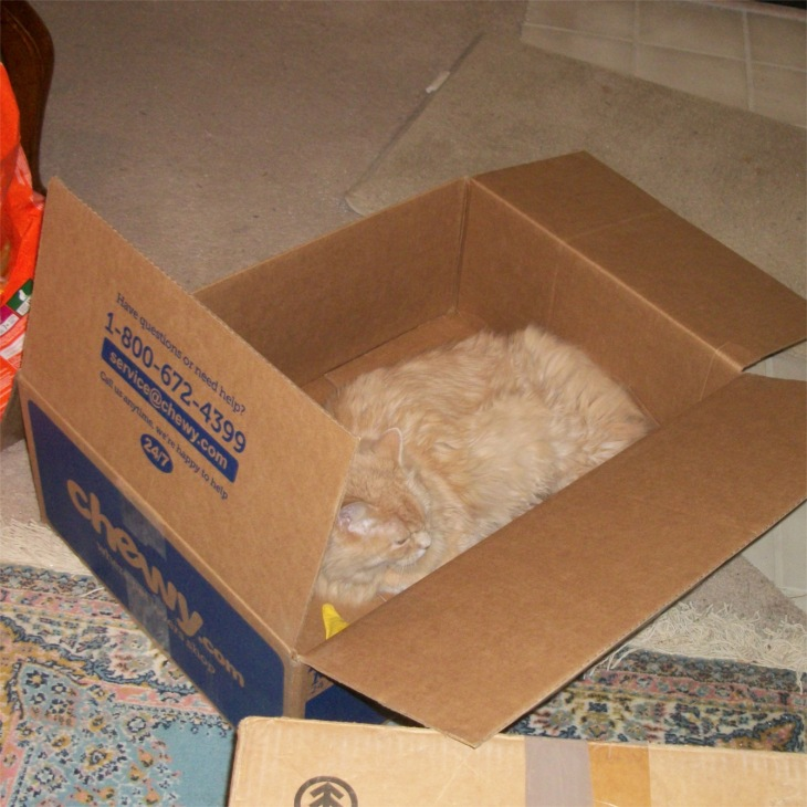 Marigold chewy box
