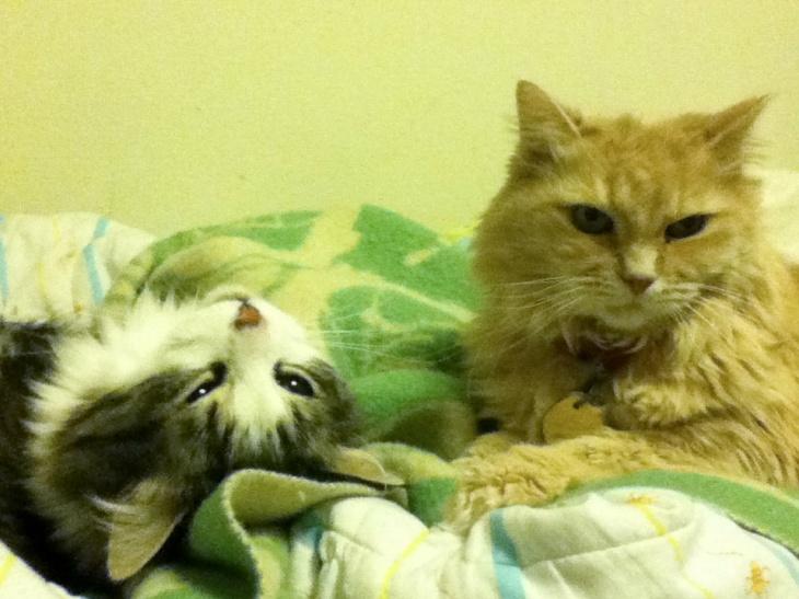 Zeke and Marigold