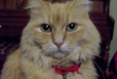 Marigold the cat