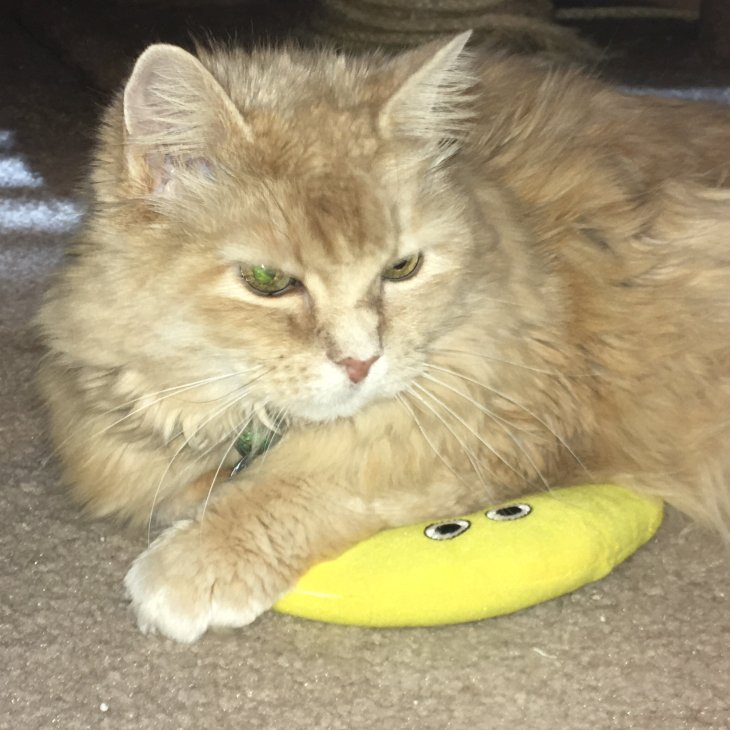 Marigold catnip boomerang