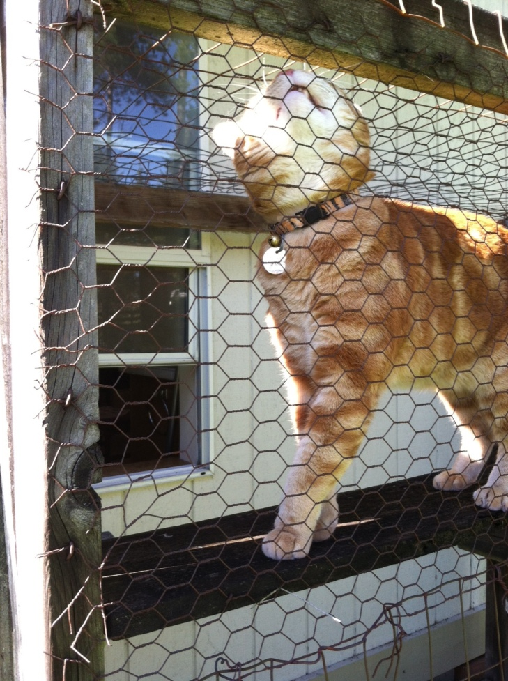 Scooby marking wire catio