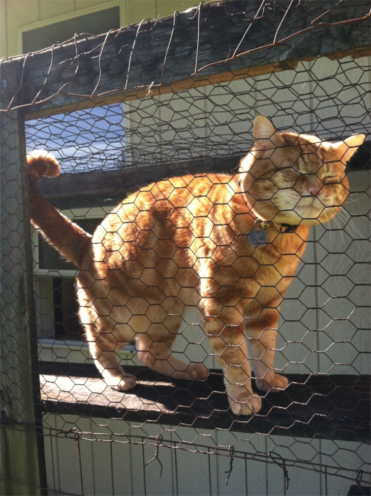 Scooby in catio