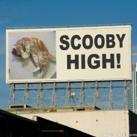 Unusual Billboard Cat! (Updated July 28, 2017)