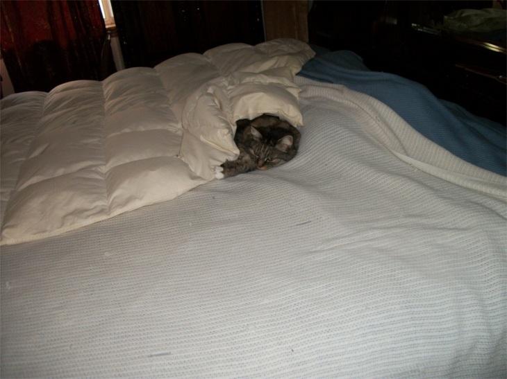 Opie in bed