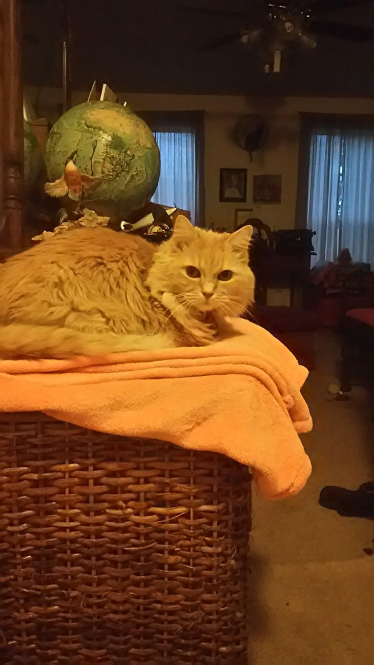 Marigold on laundry basket
