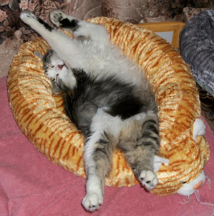 zeke in cat bed