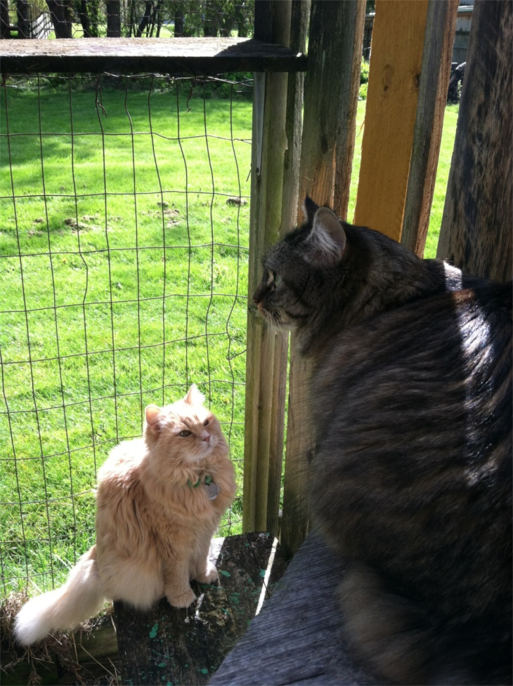 Marigold and Opie catio