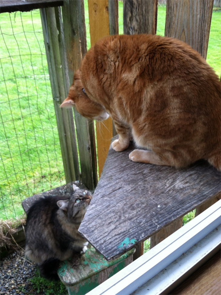 Opie and Scooby in catio