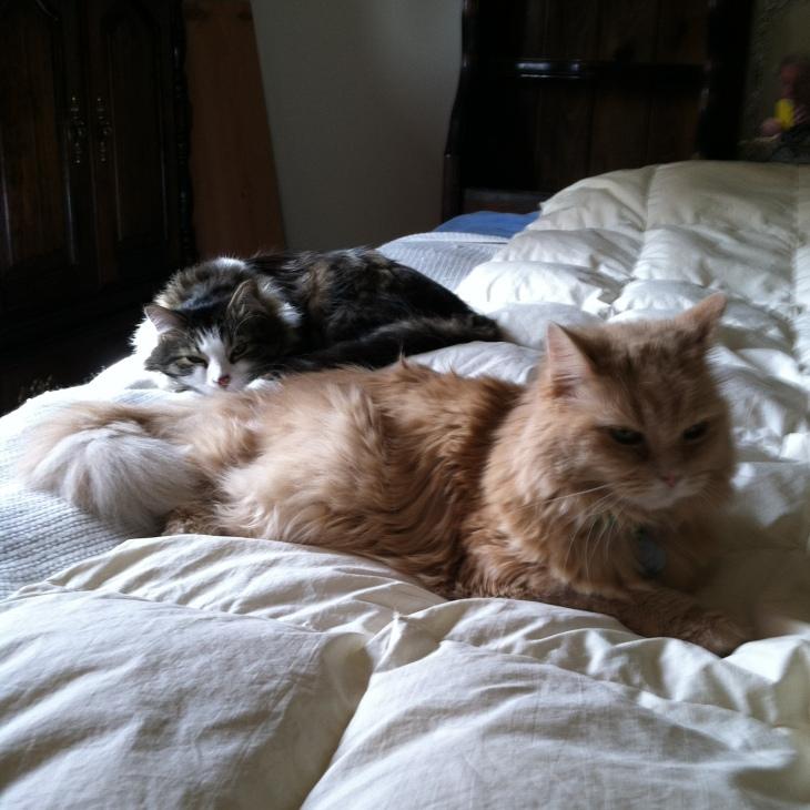 Zeke Marigold in bed