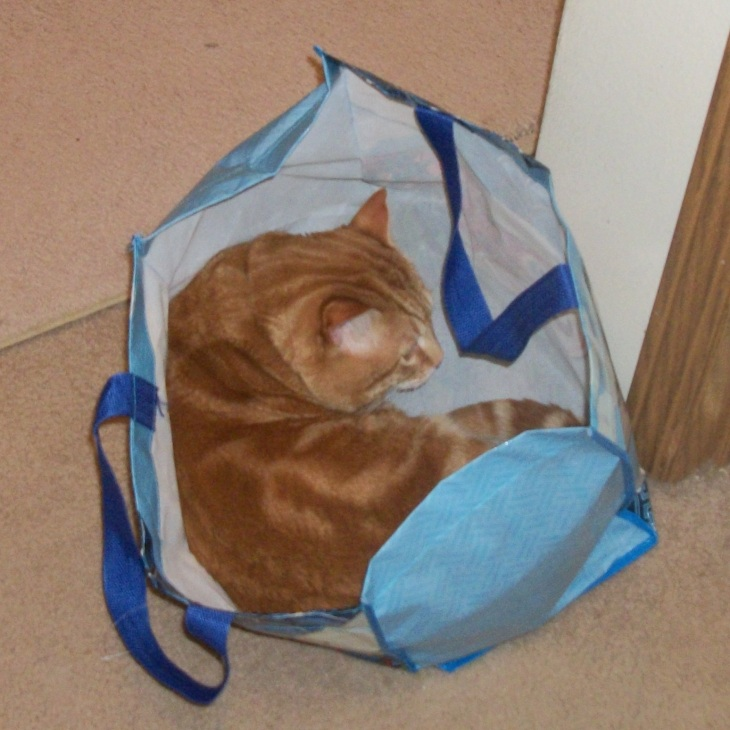Scooby in shopping bags