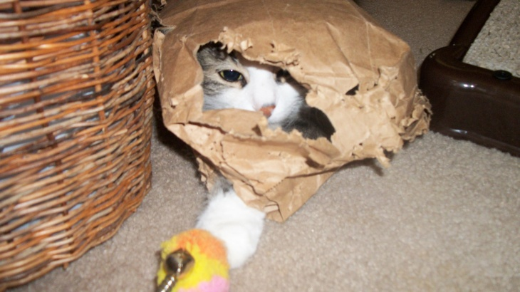 Zeke in paper bag