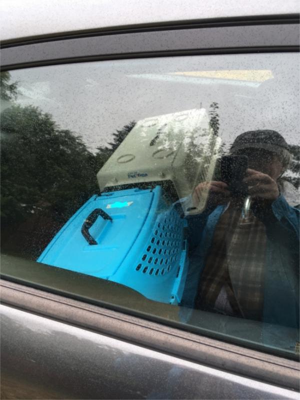 Opie Marigold back seat