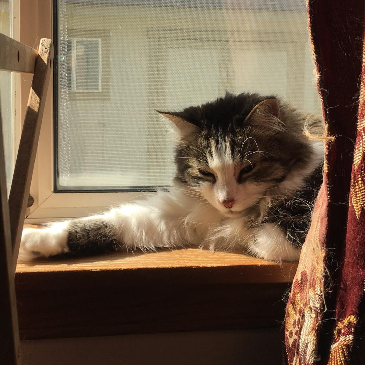Zeke on windowsill