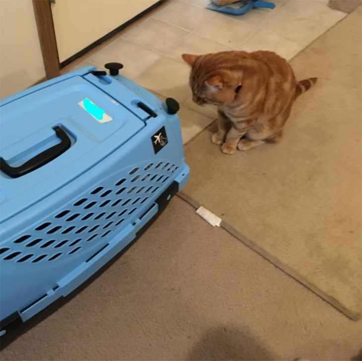 Scooby looking at cat carrier