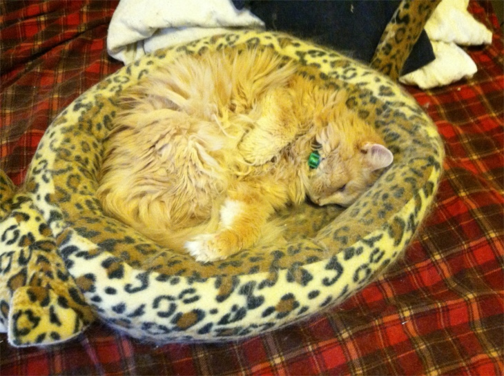 Marigold in cat bed