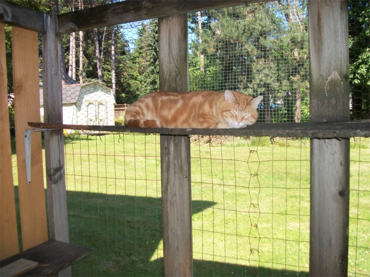 Scooby catio